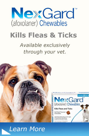 NexGard Chewables Kills Fleas and Ticks Available Exclusively Through Your Vet, Mount Tabor Animal Hospital Winston-Salem, NC